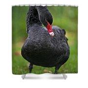 Black Swan Series - 2 Shower Curtain