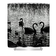 Black Swan Silhouette Shower Curtain