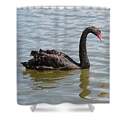 Black Swan Square Shower Curtain