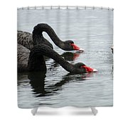 Black Swans Australia Shower Curtain