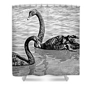 Black Swans - Black And White Textures Shower Curtain