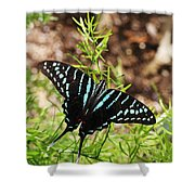 Black Swordtail Butterfly Shower Curtain