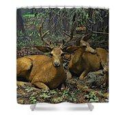 Black Tail Deer Shower Curtain