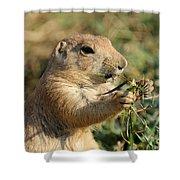 Black-tailed Prairie Dog Shower Curtain