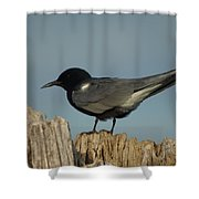 Black Tern Shower Curtain