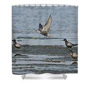 Black Terns Shower Curtain