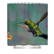 Black-throated Brilliant Shower Curtain