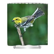 Black-throated Green Warbler, Female Shower Curtain
