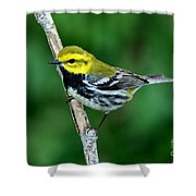 Black-throated Green Warbler, Male Shower Curtain