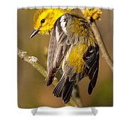 Black-throated Green Warbler Shower Curtain