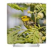 Black-throated Gren Warbler Shower Curtain