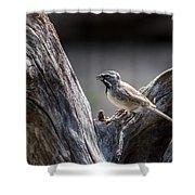 Black Throated Sparrow Shower Curtain