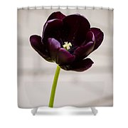 Black Tulip Shower Curtain