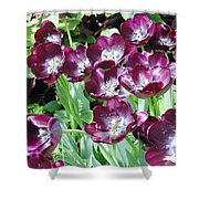 Black Tulips Shower Curtain