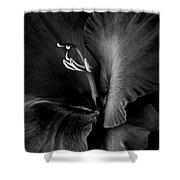 Black Velvet Gladiolia Flower Shower Curtain by Jennie Marie Schell