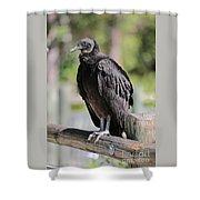 Black Vulture On The Boardwalk Shower Curtain