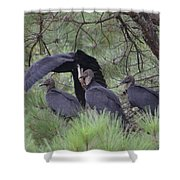 Black Vultures II Shower Curtain