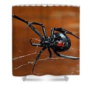 Black Widow Spider Shower Curtain