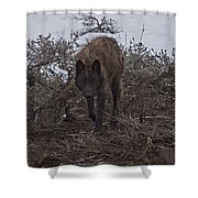 Black Wolf   #1678 Shower Curtain