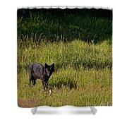 Black Wolf   7251 Shower Curtain