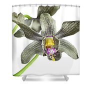 Black Yellow And Purple Orchid Shower Curtain
