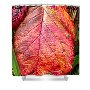 Blackberry Leaf In The Fall 3 Shower Curtain