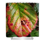 Blackberry Leaf In The Fall 4 Shower Curtain