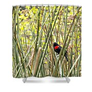 Blackbird In Reeds Shower Curtain