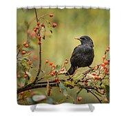Blackbird On Branch Shower Curtain