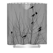 Blackbirds By The Moon Shower Curtain