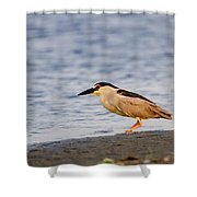 Blackcrowned Night Heron Shower Curtain