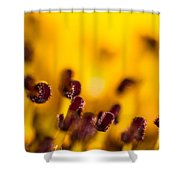 Blackweyed Susan Stamens Shower Curtain