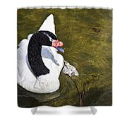 Blacknecked Swan Shower Curtain
