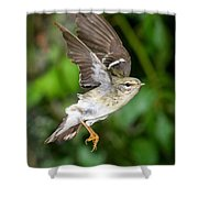 Blackpoll Warbler Shower Curtain