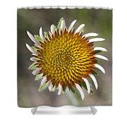 Blacksamson Echinacea Shower Curtain