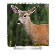 Blacktail Doe Looking At The Camera Shower Curtain