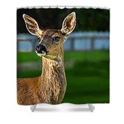 Blacktail Portrait Shower Curtain
