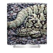Blacktailed Rattlesnake Shower Curtain