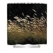 Blades Of Grass In The Sunlight Shower Curtain by Jim Holmes