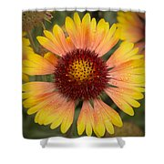 Blanket Flower Shower Curtain