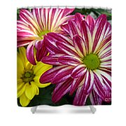 Blast Of Colors Shower Curtain