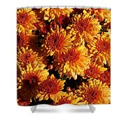 Blaze Of Flowers Shower Curtain