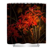 Blaze Of Leaves Shower Curtain