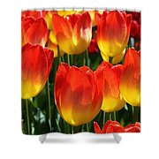 Blazing Color Shower Curtain