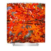 Blazing Maple Shower Curtain