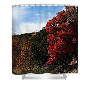 Blazing Maple Tree Shower Curtain