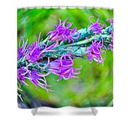 Blazing Star Shower Curtain