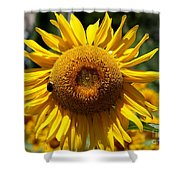 Blazing Yellow Sunflower Shower Curtain