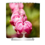 Bleeding Heart Blossom  Shower Curtain