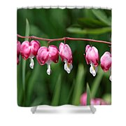 Bleeding Hearts All In A Row Shower Curtain